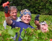 Vendanges et Beaujolais Primeur 2011